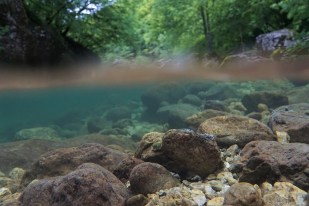 Underwater shot in a tributary of the Soca