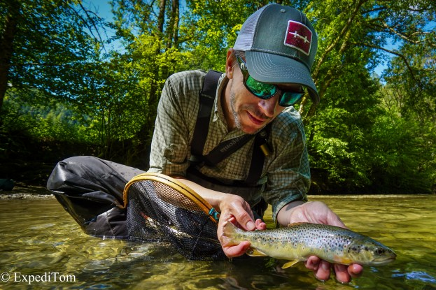 Swiss Brown Trout