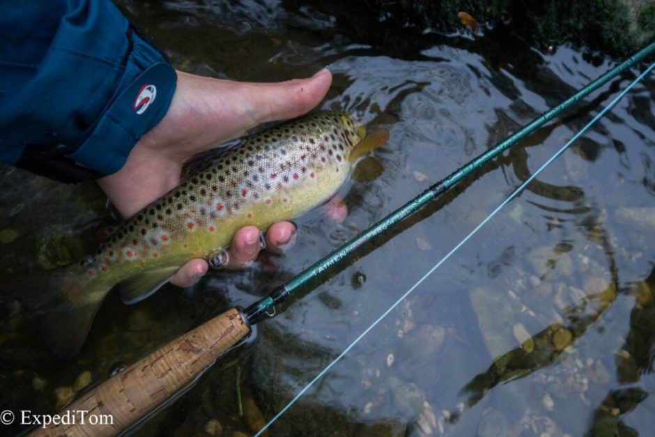 Swiss brown trout from the canal - amazing how beautiful fish can grow in such a ecological wasteland