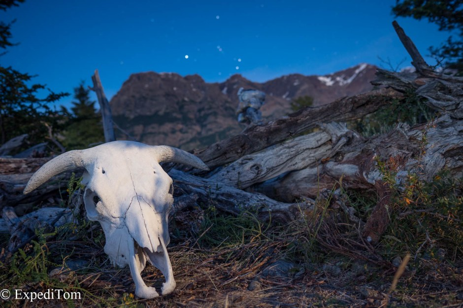 Skull of a bull in the wilderness of Patagonia in front oft the Constellation of Orion which is upside down for people like me from the northern hemisphere
