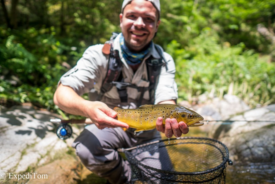 Lovely brown trout from the Black Forest Creek in Germany