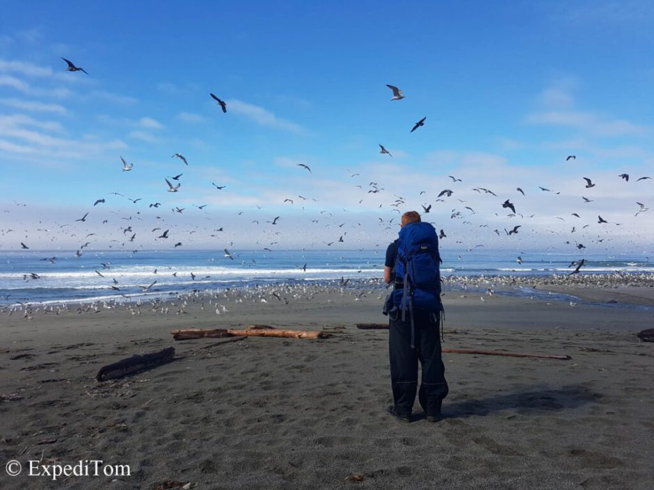Too many birds along the WCT on Vancouver Island BC