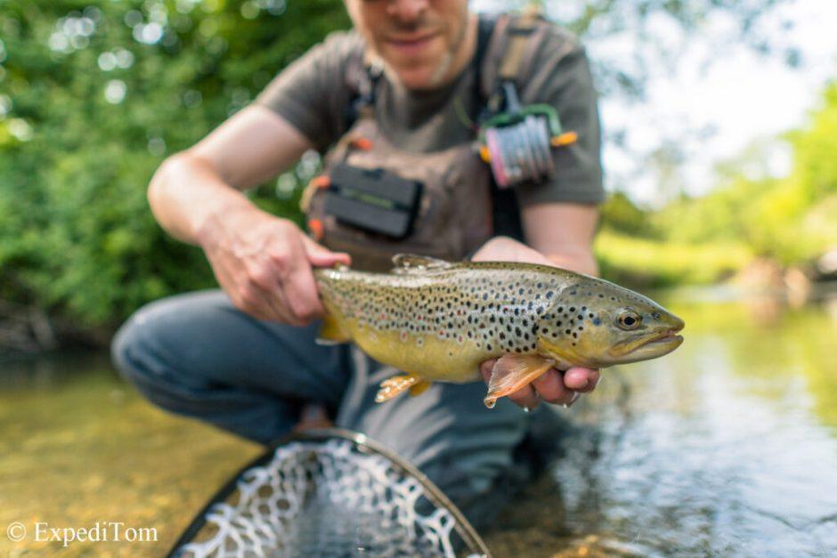 Wonderful specimen from fly fishing Switzerland during Summer