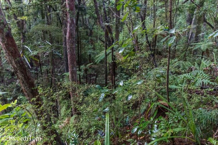 Original Vegetation in New Zealand