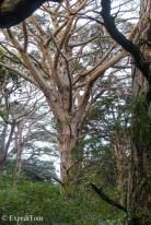 ExpediTom Stewart Island in Winter 014