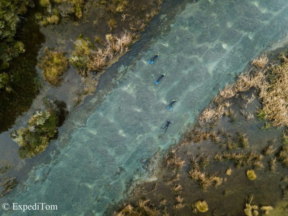 Do you see the trout? On this drift dive, they counted 1100 trout within 1 kilometer close to Rotorua.