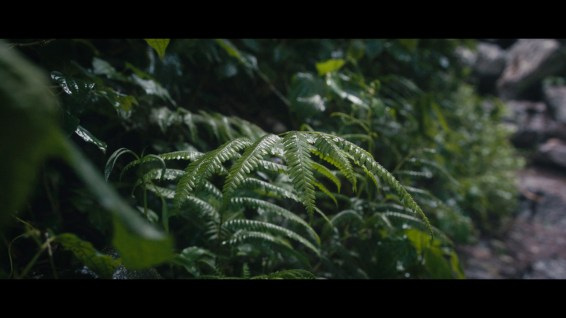 Colour grading and sound desing is on point