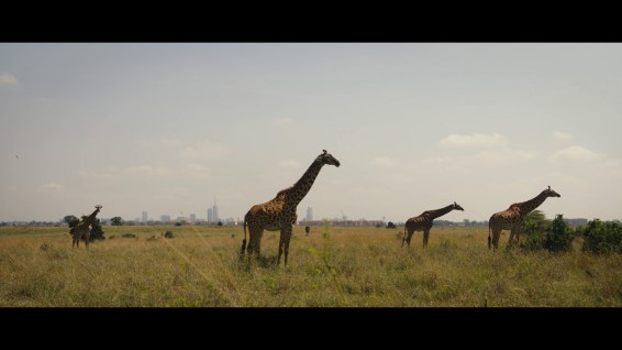 Kenyan Wildlife with backdrop of skyline