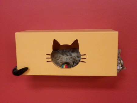 How to throw a cat-tastic birthday party: visit a cat cafe!