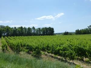 Corbieres Vineyards