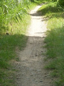 Narrowing deeply rutted paths near Marseilette