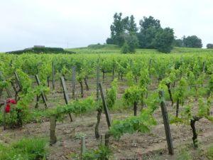 The vineyards at Franc-Pourret