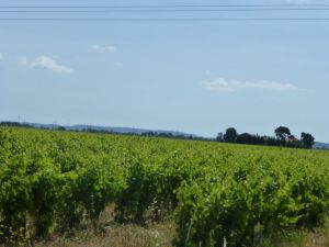 Vineyards enroute to Lezignan Corbieres