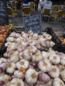 My favorite sweet purple garlic