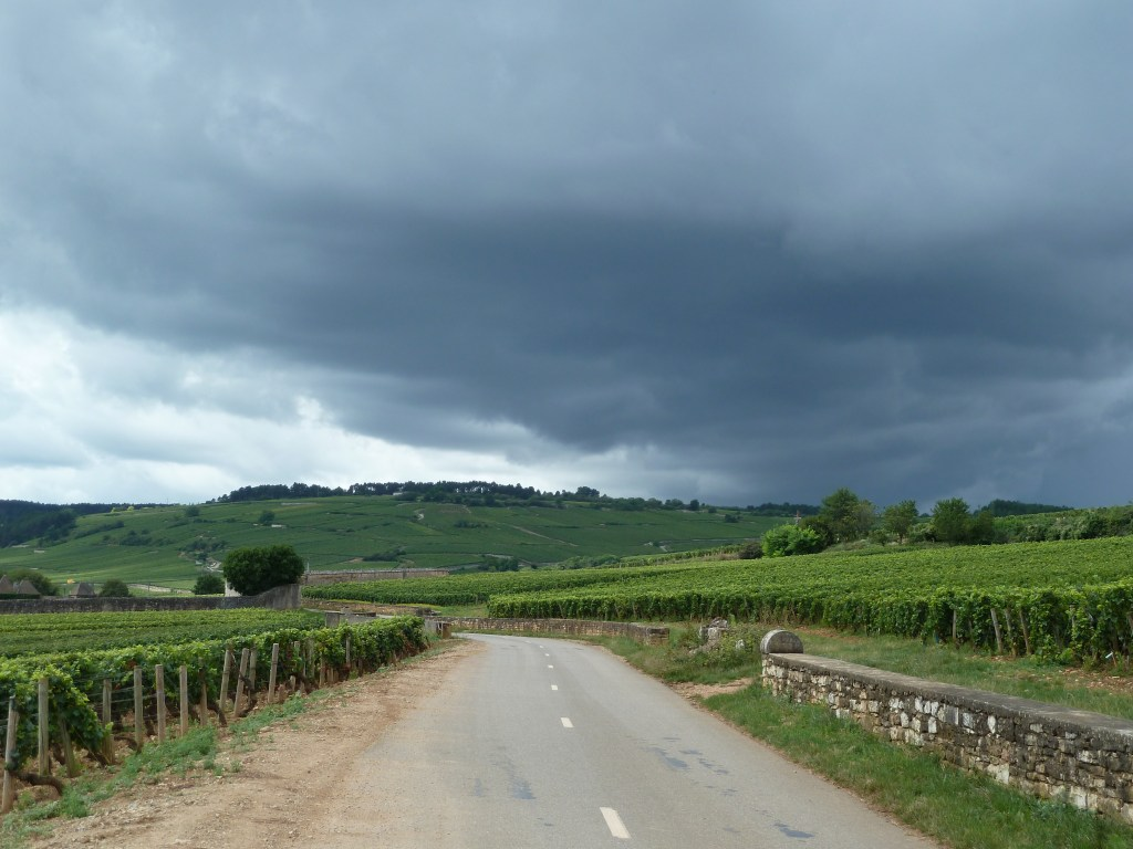 By bike is the best way to experience the vineyards of France