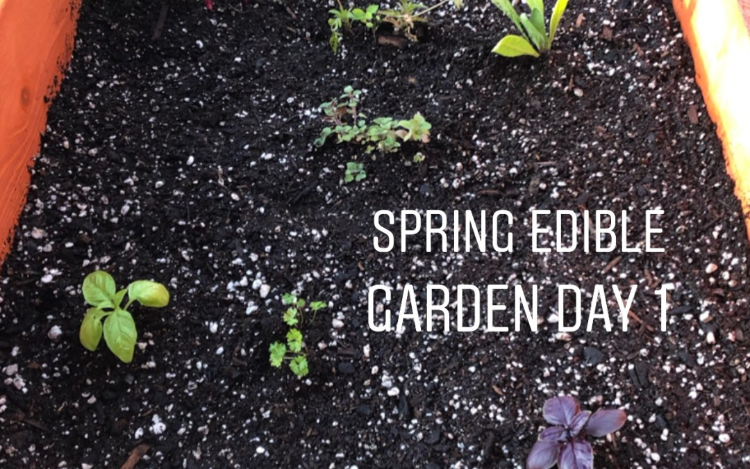 Experience Nutrition: My First Arizona Spring Home Garden. Steps and Tips to Grow your own Edible Veggies, Herbs, and Flowers.