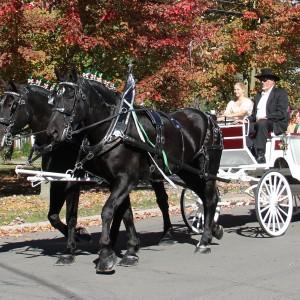 JK-Percherons-Horse-and-Carriage-300×300