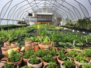 Kingbird-Farm-Conservatory-Web