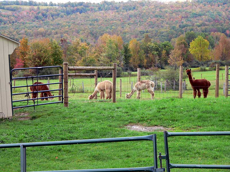Alpacalachin Farm