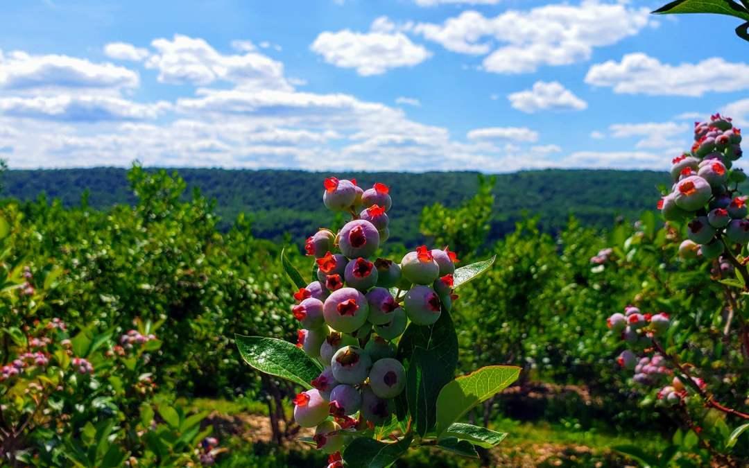 Hillberry Farm