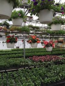 ye-olde-country-florist-1