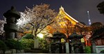 "Asakusa Sensoji – Night time illumination of cherry blossoms or ""yozakura"""