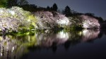 Top 100 : Cherry blossom illuminations at Inokashira Park in Kichijoji