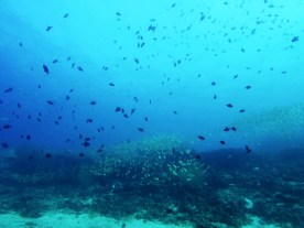 massförekomstfisk5