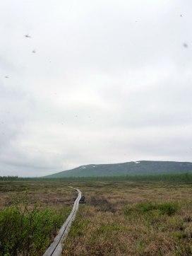 Mosquitoes in a blur - rensjön Swedish Lapland
