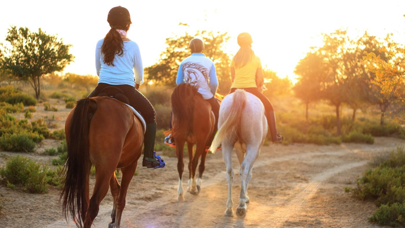 caballos-campo