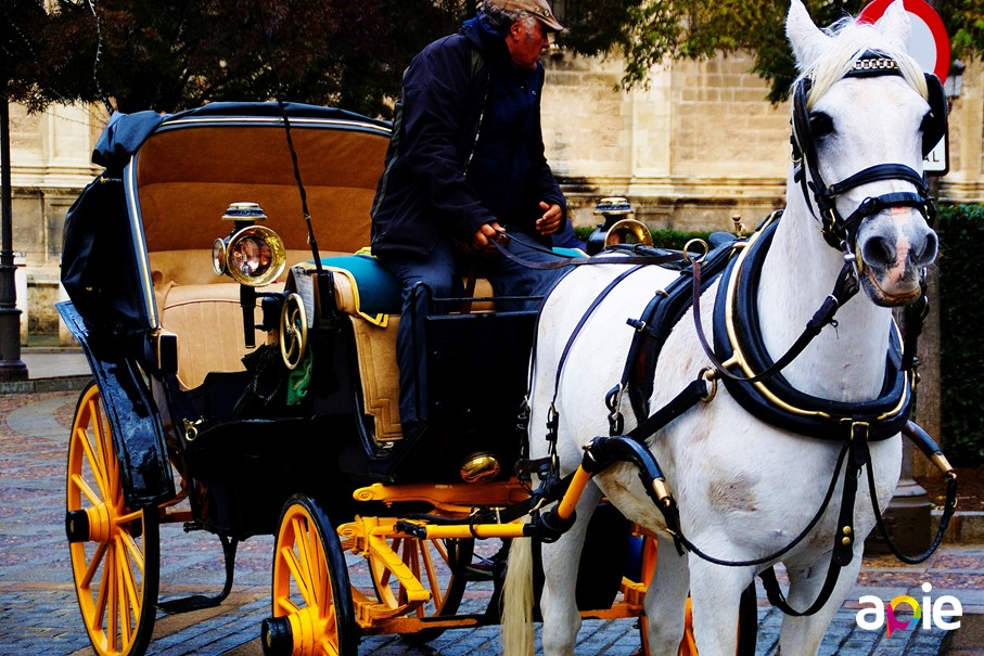 Seville tour in a horse-drawn carriage