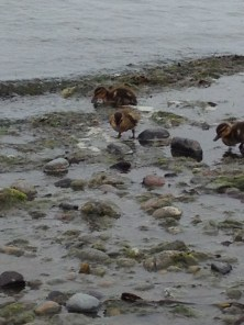Cute lil' ducks
