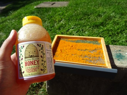 Delicious honey to take home.