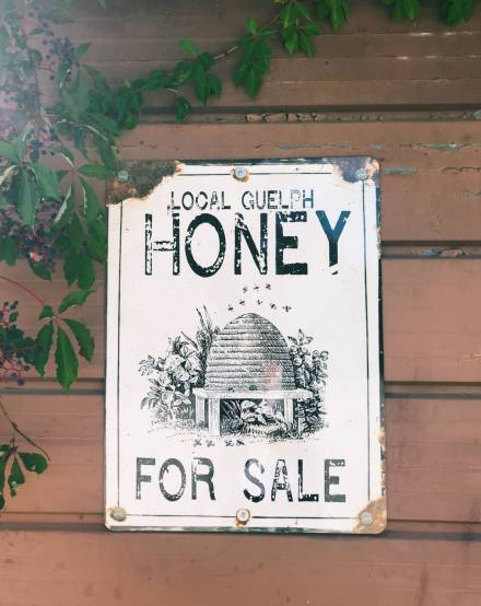 Local Guelph honey for sale