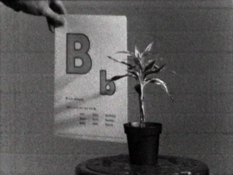 0bxtwkg0pdyhx8j5fvd1gg%2fjohn-baldessari-teaching-a-plant-the-alphabet-1972