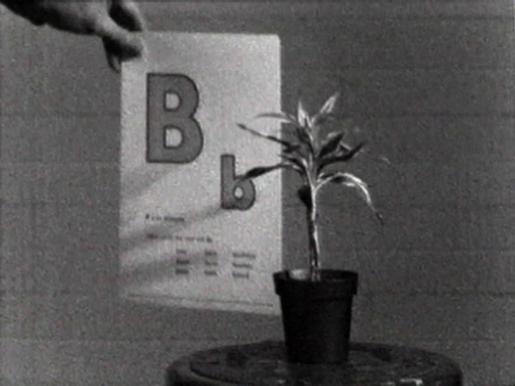 0bxtwkg0pdyhx8j5fvd1gg%2fjohn-baldessari-teaching-a-plant-the-alphabet-1972