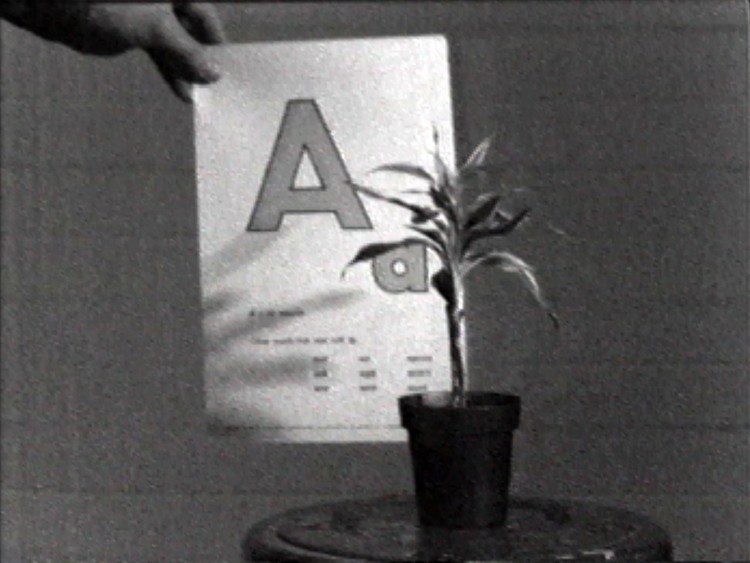 john-baldessari_teaching-a-plant-the-alphabet_1972_