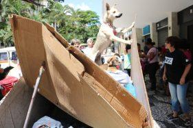 cachorro-moradores-de-rua-e-seus-caes-6