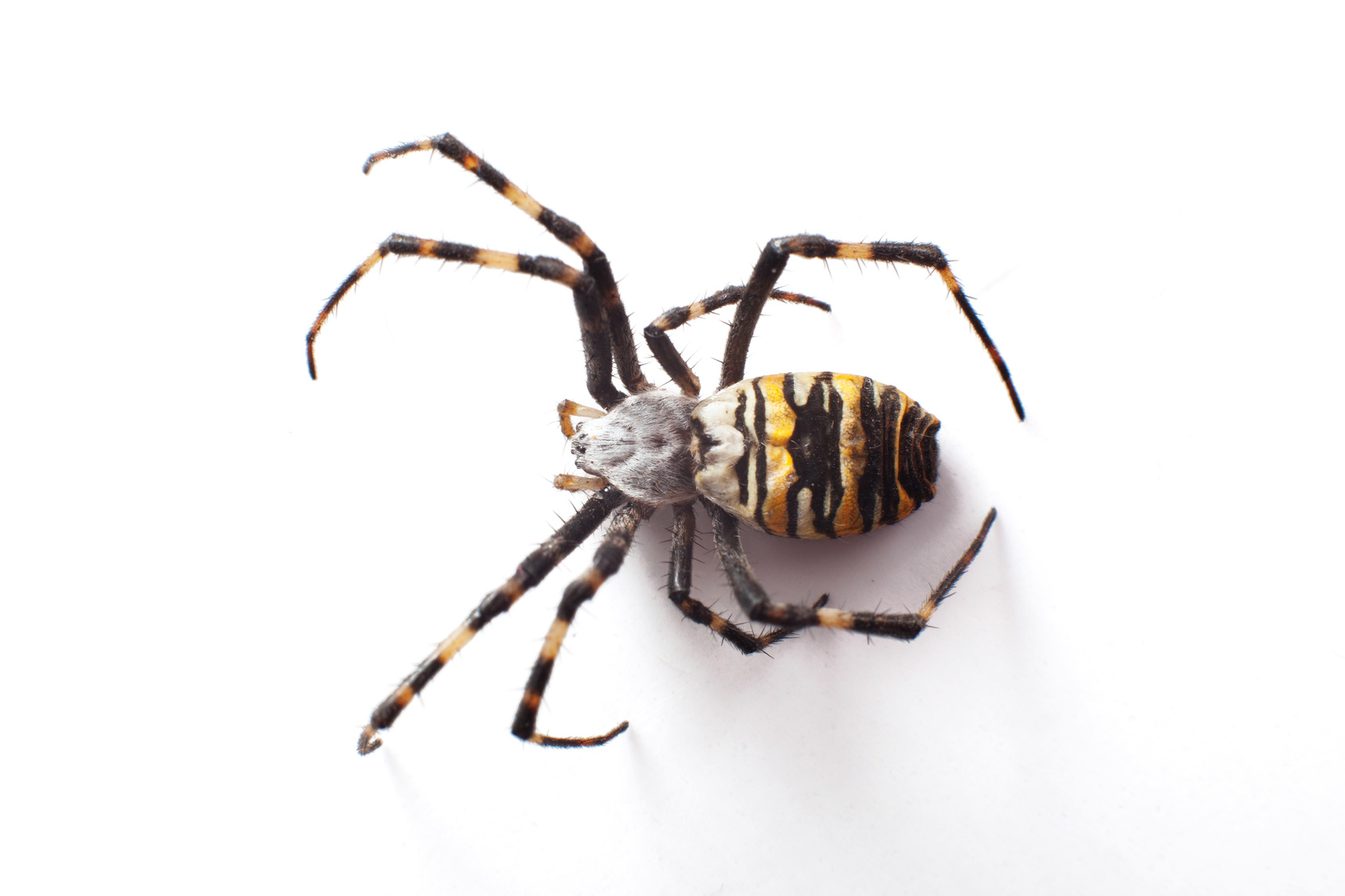 Sort Spiders And Insects Experiment Exchange