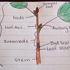 How To Draw Stem And Leaf Diagram Kazuma Falcon 110 Wiring Experiment No 1