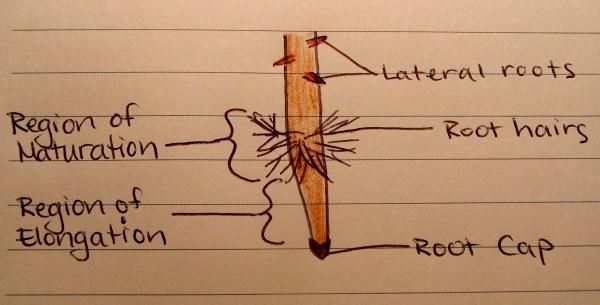 Diagram Experiment . 1