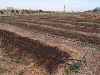 Planted rows
