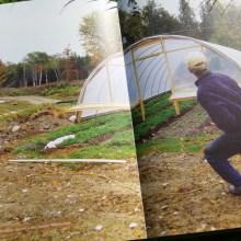 Foto aus dem Handbuch Wintergärtnerei (Ausschnitt 3)