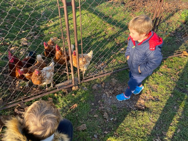 children, chickens, farm