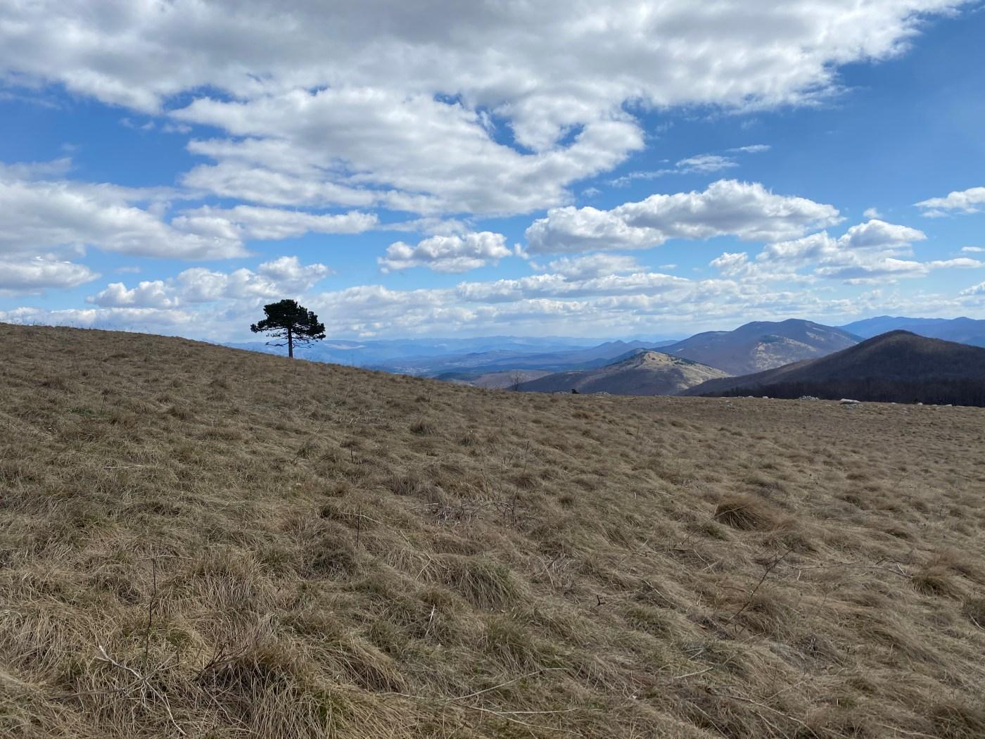 Lone tree on mountainside