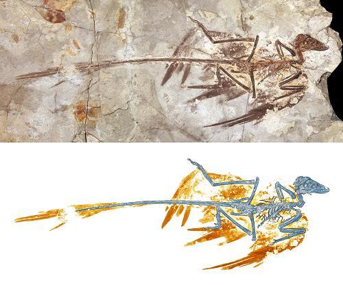 Микрораптор - динозавр