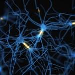 Ученые способны предсказать поведение, измеряя «состояние» нашего мозга
