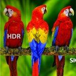 Skyworth 4К UHD Q20 AIoT Dolby Vision — уже в Украине