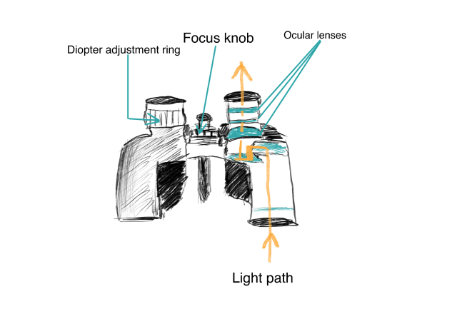 how binoculars focus - the knob focus system