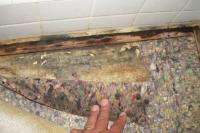 Dont let soggy carpet, carpet, walls or ceilings lead to mold